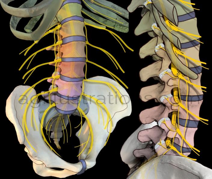 Case Study Spine
